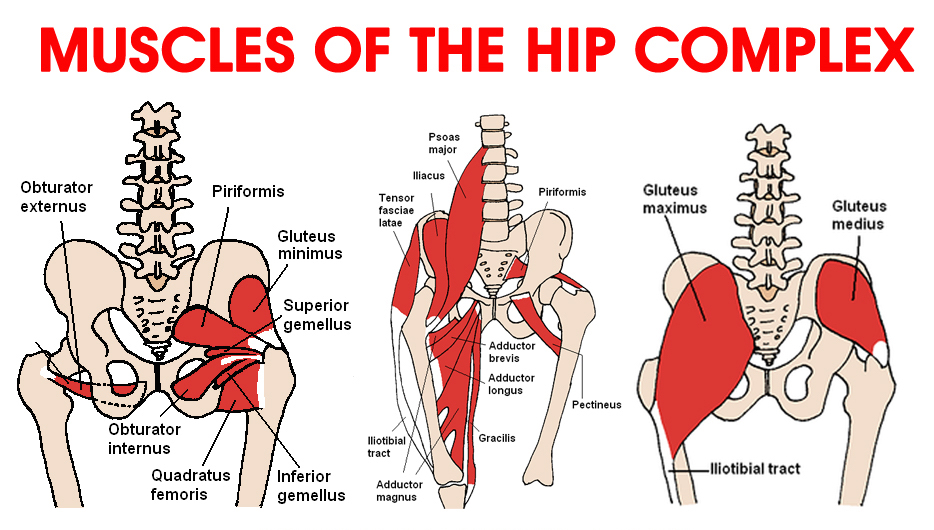 Muscles Of Hip Dance Life