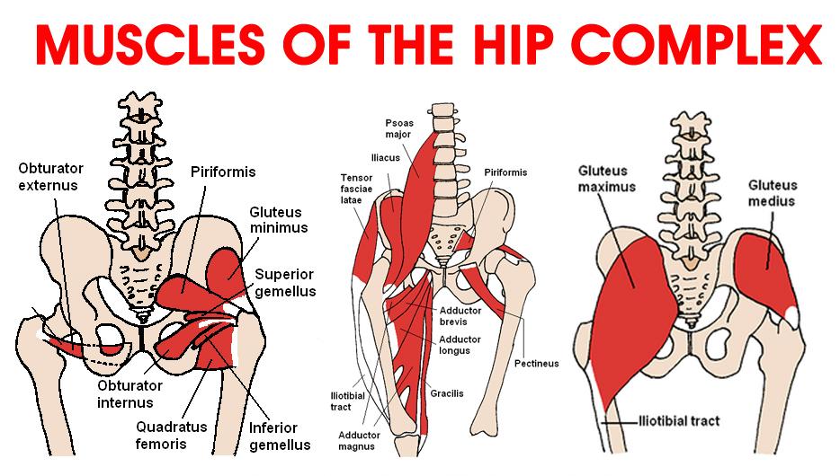 Ask the Physio … Hip Flexors | Dance Life